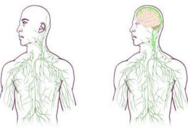 Brain and Immune System